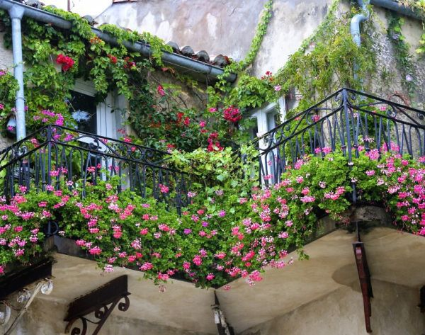 Trang trí ban công ngày tết với hoa 1