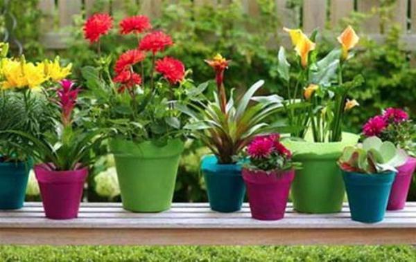 Trang trí ban công ngày tết với hoa6