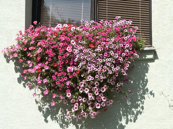 Trang trí ban công ngày tết với hoa 8